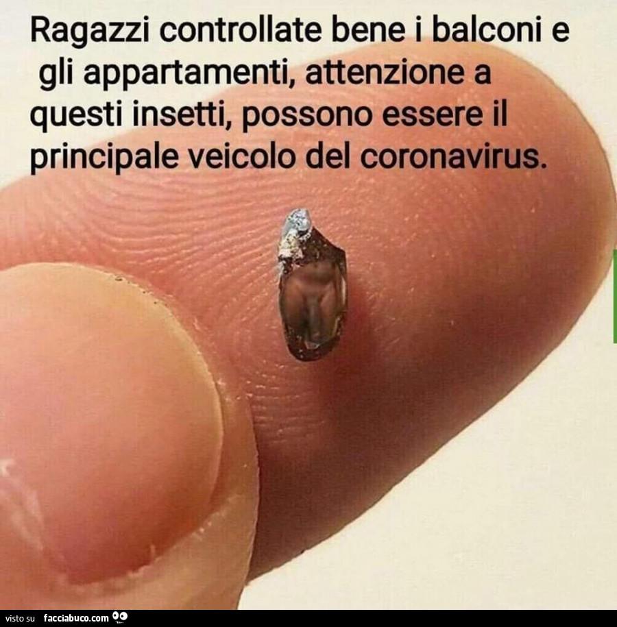 pene insetto)